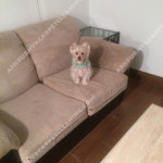 Ashburn-Sofa-Pet-Stain-Cleaning