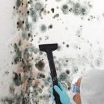 Black-Mold-Remediation-Ashburn