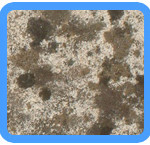 Water-Mold-Removal-Ashburn